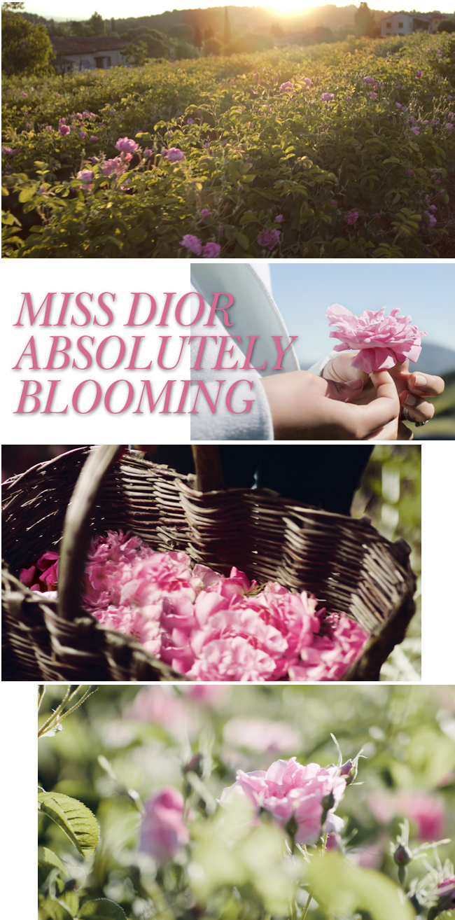 MissDiorABlooming