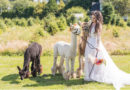 Alpaca wedding mood board in fall theme colour paletter featured in Perfect Wedding Magazine